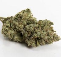 Buy Elmer's Glue Weed Adelaide