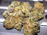 Dawg Cookies Weed AU