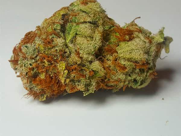 Pacific Blue Marijuana Tumut