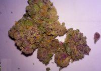 Purple Alien OG Weed Dalby