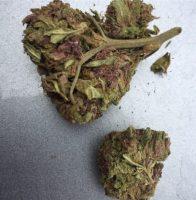 Purple Gorilla Marijuana Richmond