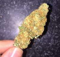 Tangerine Haze Weed Launceston