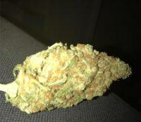 Cinderella 99 Weed Tasmania