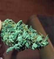 Mango Kush Cannabis AU