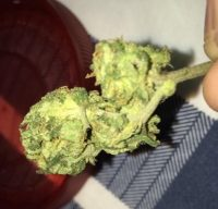 Vanilla Kush Marijuana Mildura