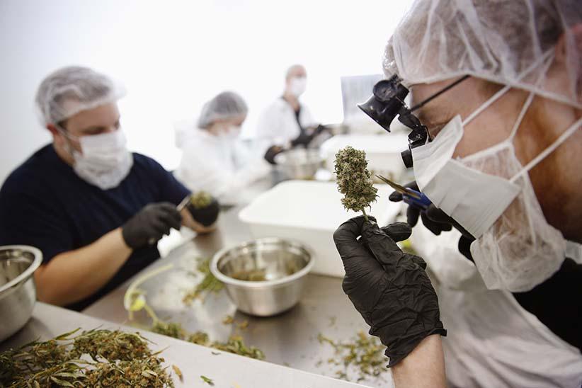 Marijuana Quality Control