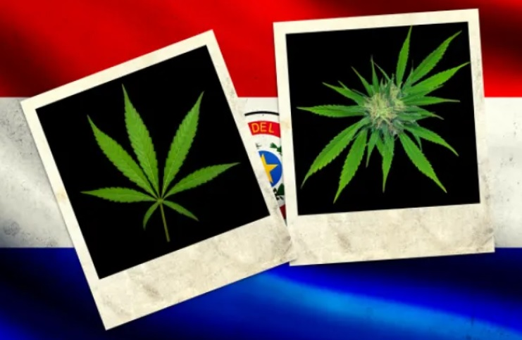 Paraguay To Export Cannabis Oil To USA And Australia